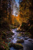 Landschaftsbild Schwarzwald